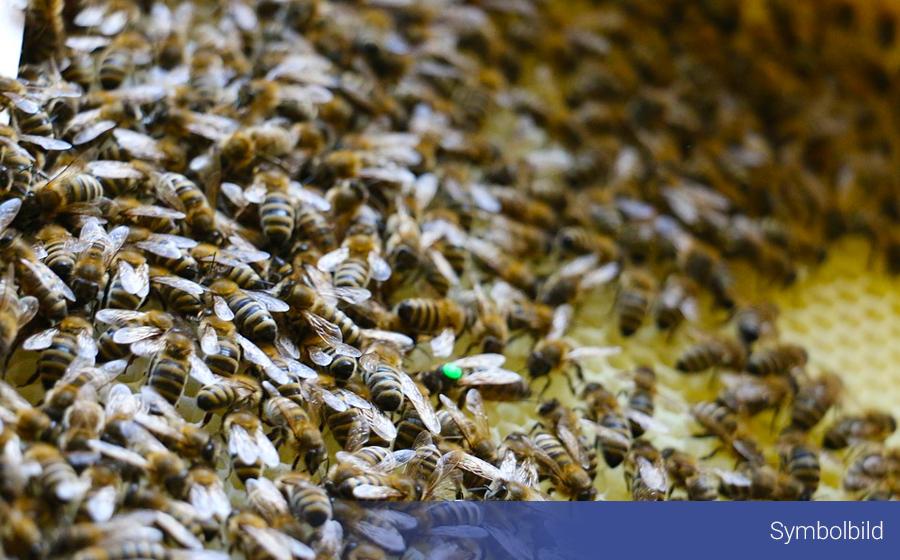 Fleißige Bienen