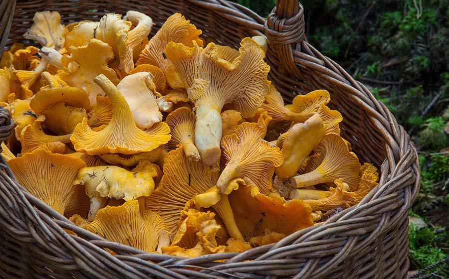 Pilze sammeln OG Feilbingert